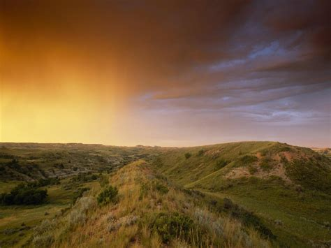 grasslands information  facts national geographic