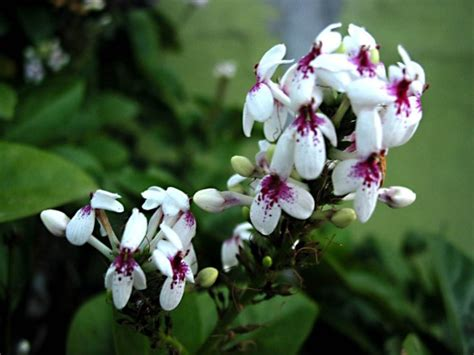 tanaman hias bunga   digunakan