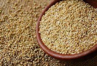 quinoa come cucinarla quinoa cos 232 e come cucinarla paperblog