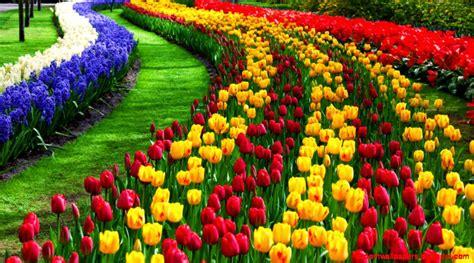 wallpaper hd widescreen high quality desktop flower wallpaper hd widescreen high quality desktop flower zoom