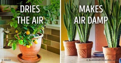 tanaman hias  rumah   cantik