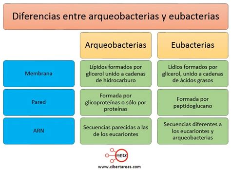 diferencia entre imagenes informativas y expresivas dominio archaea biolog 237 a 1 cibertareas