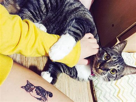 cat tattoo south korea cat tattoos are the cutest crime in south korea