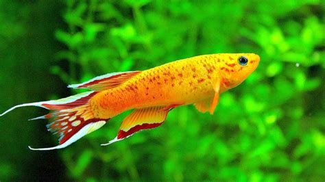 fish colors colour therapy aquarium