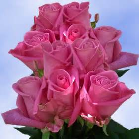 100 purple roses for sale where to buy purple roses cost of roses global rose
