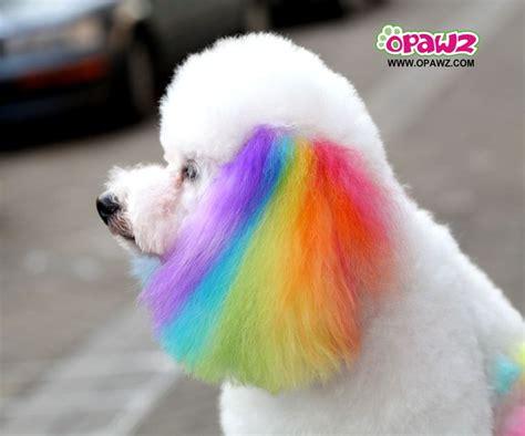 hair dye for dogs best 25 hair dye ideas on kool aid hair kool aid dye and safe hair color