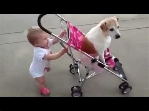cute dogs and adorable babies compilation youtube funny babies annoying dogs cute dog baby compilation