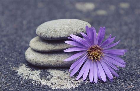 tipi di fiori di bach il significato dei fiori nello integrale cure