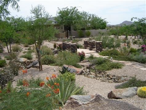 landscaping in arizona turn your lawn into desert desert crest press