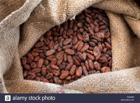 Sac Jute Cacao by Sack Of Cocoa Beans Photos Sack Of Cocoa Beans Images