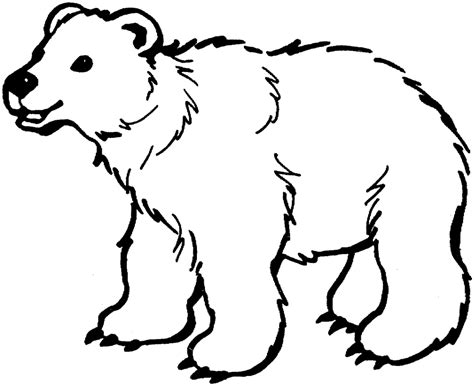coloring page polar bear free printable downloads from
