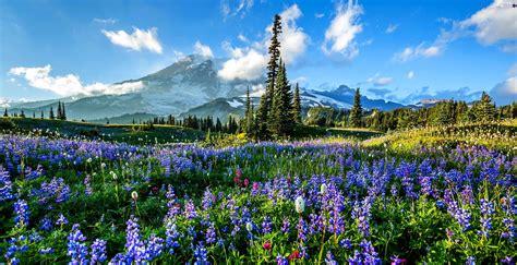 meadow mountains woods flowers beautiful views
