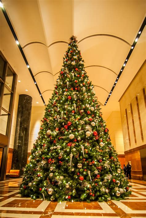 festively decorated christmas trees stockvaultnet blog