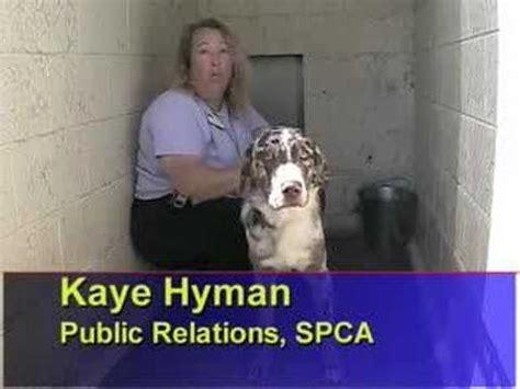 yorkie kennel cough understanding kennel cough in your terrier funnydog tv