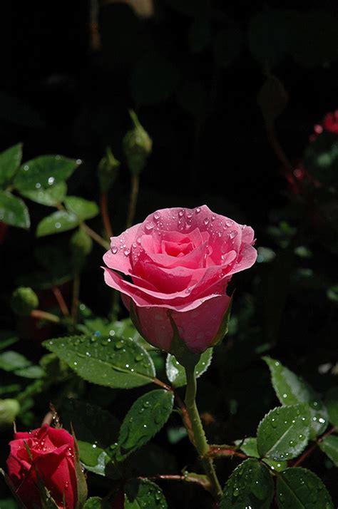 rosa möbel danielle rosa danielle in lincoln