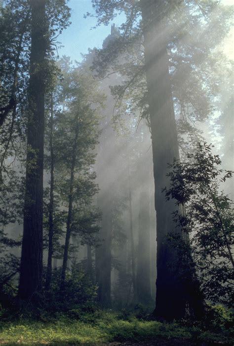 Redwood Lighting file redwood light jpg wikimedia commons