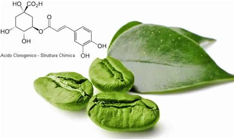 acido clorogenico in quali alimenti si trova acido clorogenico cosa 232 controindicazioni e effetti