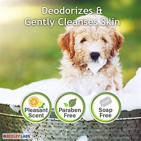 peroxide for dogs curabenz 1 benzoyl peroxide shoo for dogs cats eliminates mange seborrhea