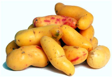 q proteinas tiene la yuca cultivos antiguos el olluco es peruano