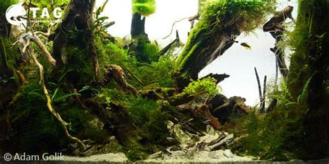 images  jungle aquascaping style tag
