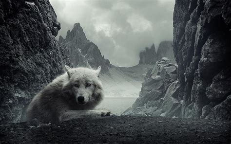 imagenes lobo blanco lobo blanco en las monta 241 as rocosas fondos de pantalla gratis
