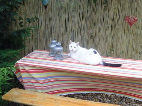 oase terrassen terrasse balkon unsere oase mein domizil zimmerschau