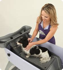 dog bathtubs for home use 1000 images about dog grooming on pinterest dog grooming tubs and color blue