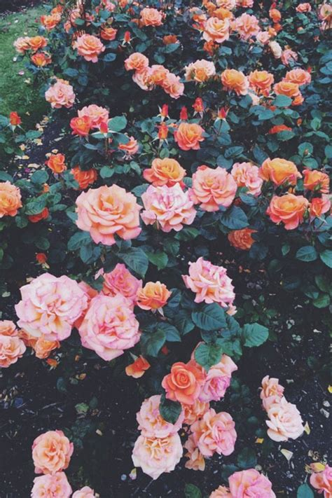imagenes flores tumblr photo collection flores wallpaper tumblr