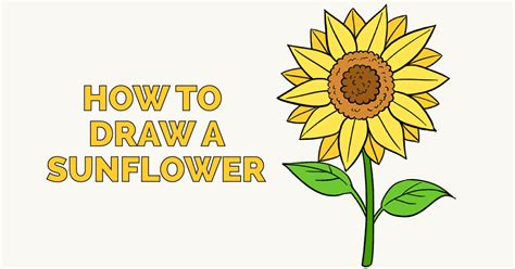 doodle drawing guide sunflower drawing ankaperla
