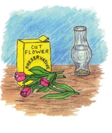 fresh cut flower preservative how to guide for cut flowers
