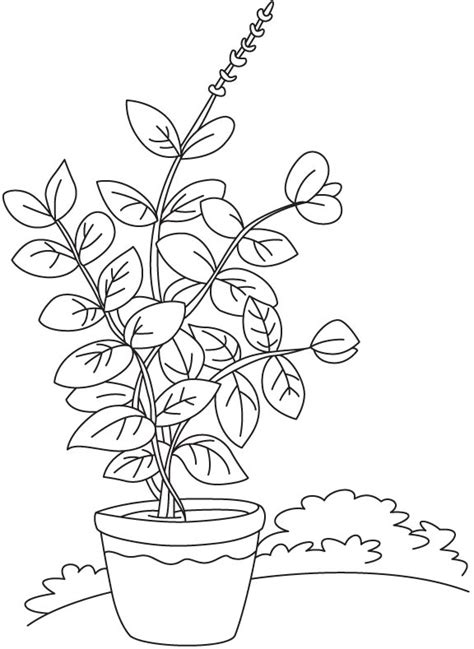 herbs free coloring pages
