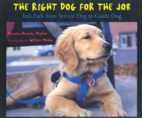 how to service dogs as a career the right for the ira s path from service to guide dorothy hinshaw