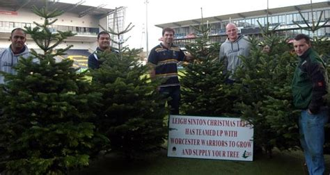 christmas tree offer extended worcester warriors