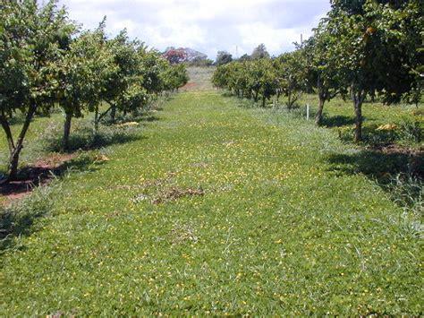 imagenes abonos verdes diferencia entre abonos verdes y cultivos de cobertura
