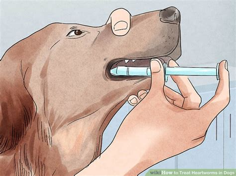 how to treat heartworms in dogs heartworms in dogs www pixshark images galleries with a bite