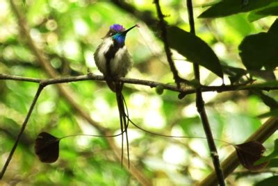 Tempat Makan Burung Kolibri burung kolibri unik yang terbang mundur