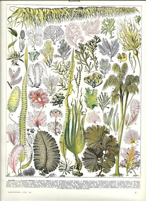 libro botanical drawing in color seaweed botanical illustration from poster french color dictionary 1930 prom 2014 2017
