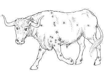 verifica affinit 224 astrologica di coppia segno toro