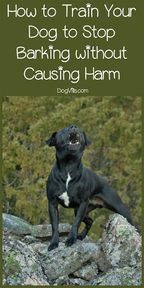 how to teach any dog to stop barking humanely effectively how to train your dog to stop barking without causing harm