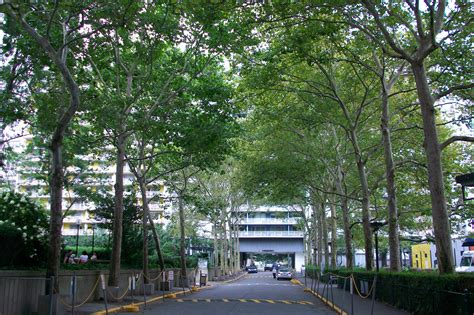 what are the 10 most common trees in new york city - City Tree