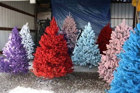 spray painted christmas trees 6 non traditional tree ideas airtasker