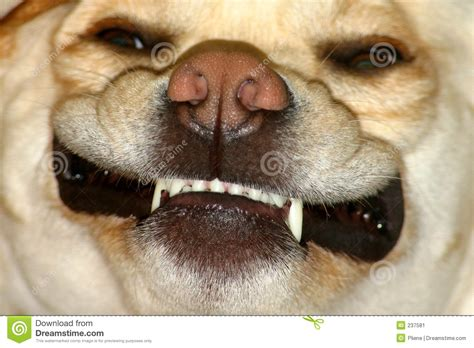 dogged meaning looking dogs www pixshark images galleries with a bite