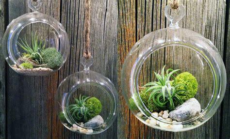 giardini in miniatura terrarium un giardino in miniatura