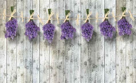 fiori lavanda carta da parati fiori in legno di fiori lavanda