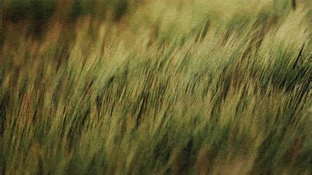 stereocolours — adam marshall grass in the wind society6