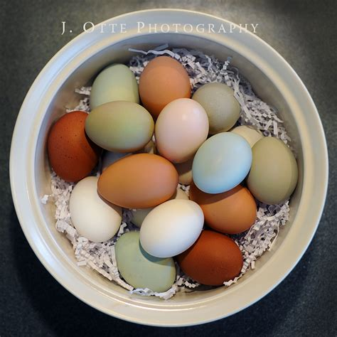 colored eggs coop day usa it be s that way sometimes