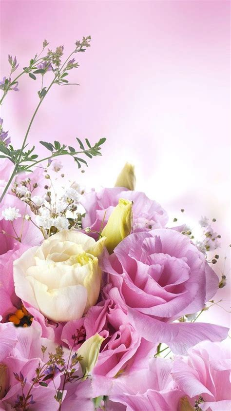 imagenes de rosas de whatsapp fondos para whatsapp de flores im 225 genes wallpappers