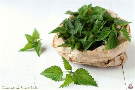 cucinare ortica ortica ricette per il benessere fai da te ortica erbe e
