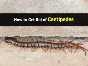how to get rid of cockroaches in bathroom how to get rid of centipedes