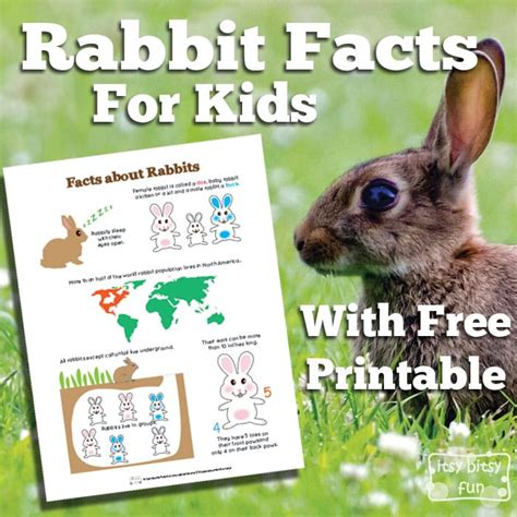 7 Facts On Bunny Rabbits by Rabbit Facts For Itsy Bitsy